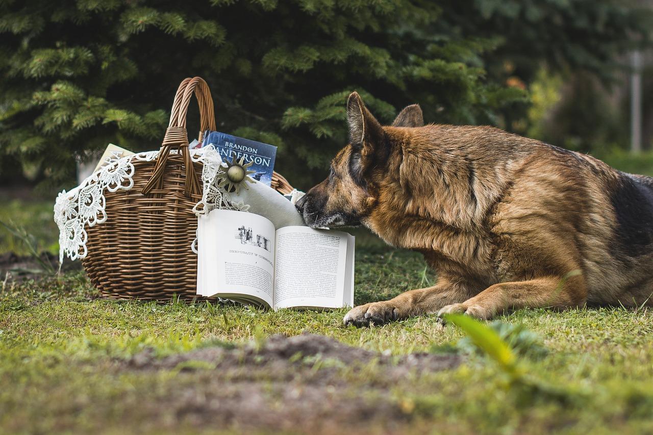 Schäferhund beim lesen seines Buches