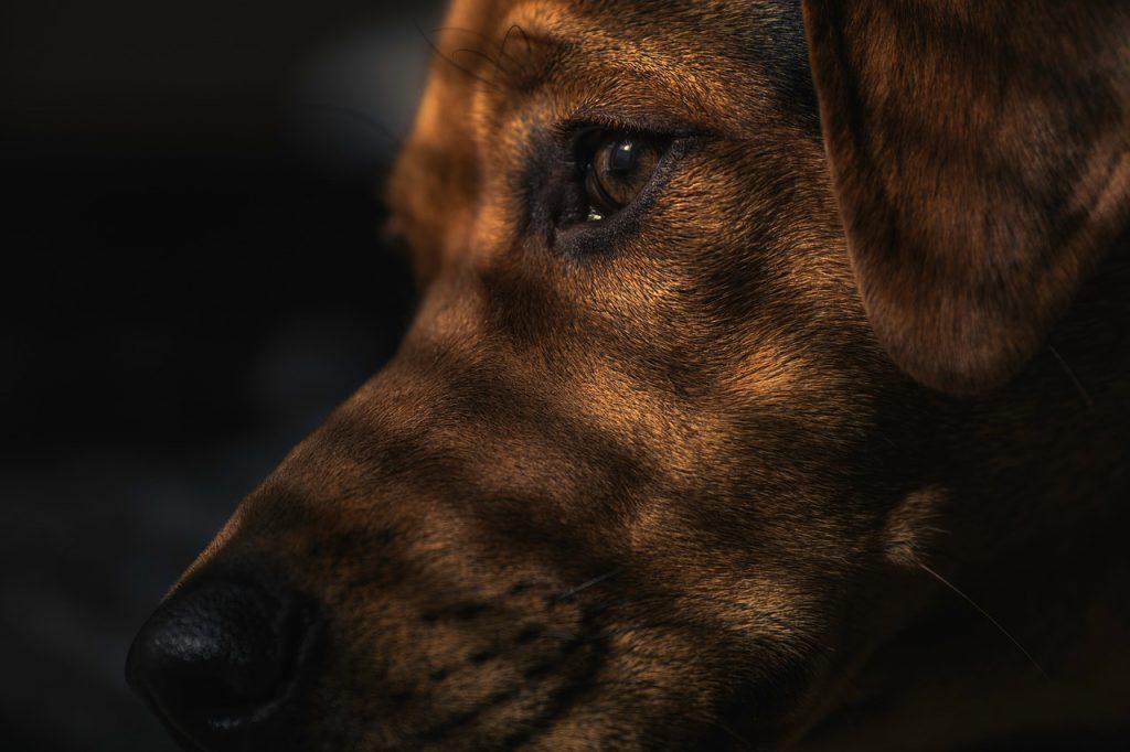 Hund mit Schatten
