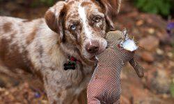 Hund mit Teddi